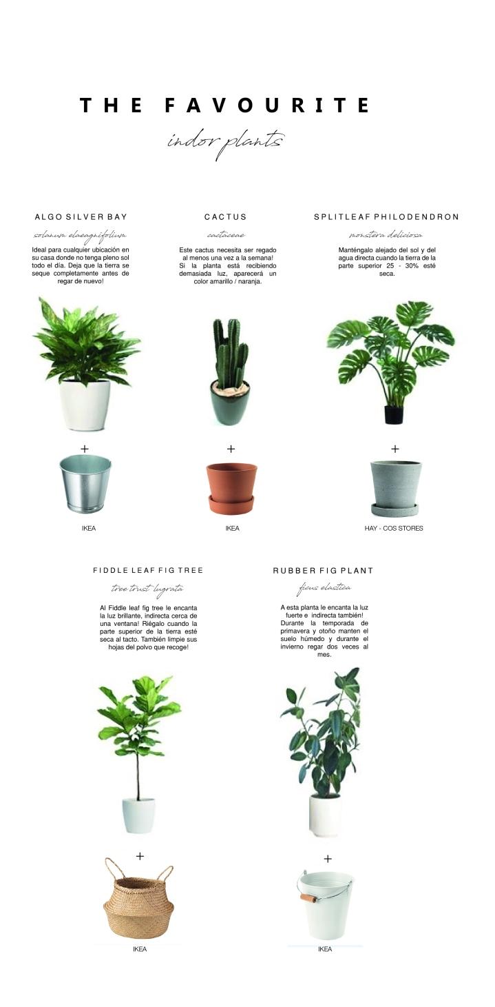 FAV PLANTS